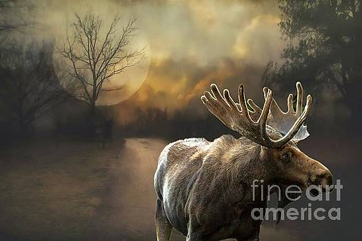 Moon and Moose by Janette Boyd