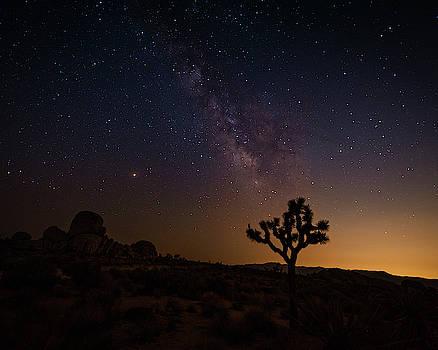 Milky Way Over Joshua Tree by Nazeem Sheik