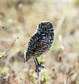 MIghty Little Fellow by Sally Sperry
