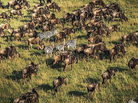 Migration by Robin Zygelman
