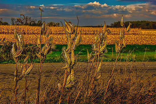 Milkweed and Corn Harvest by Pat Cook