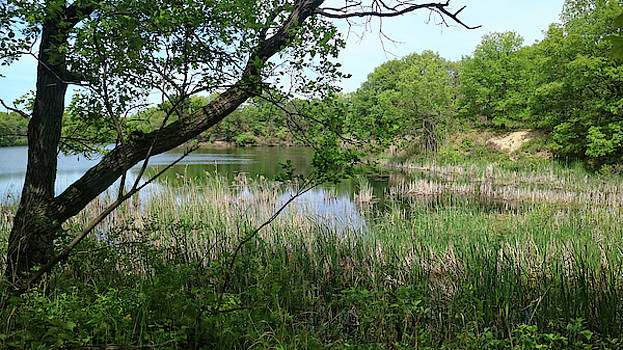 Scott Kingery - Miller Woods Pond Nearing Dunes