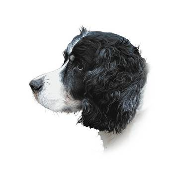 Misko in Profile - The English Springer Spaniel by Chris Gill