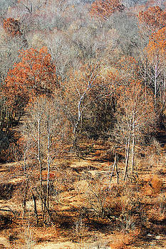 Missouri Oak Forest  At Autumn by Tom Janca