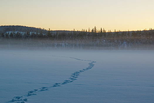 Mists are rising above animal tracks leading over a frozen lake by Intensivelight