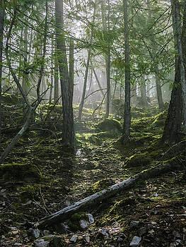 Misty Forest Morning by Dave Matchett