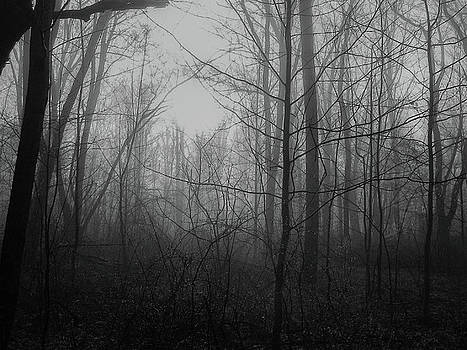 Misty Morning - Black and White by Michael Hills