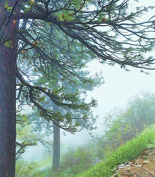 Misty Pines by Paulette B Wright