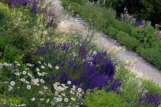 Border of Mixed Summer Flowers by Jenny Rainbow