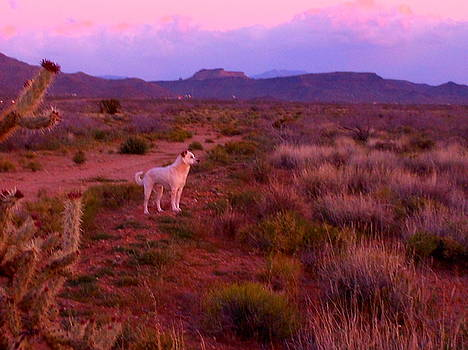 Mocha, King Of The Great Mohave Desert by James Welch