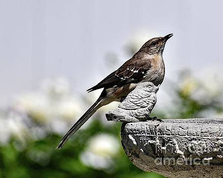 Mockingbird Mocking A Bird Statue by Cindy Treger
