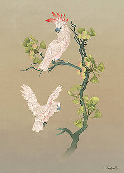 Moluccan Cockatoos  by M Spadecaller