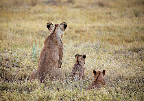 Mom and Cubs by John Rodrigues
