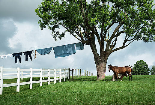 Momma, her foal and a side of Amish laundry by Matt Shiffler