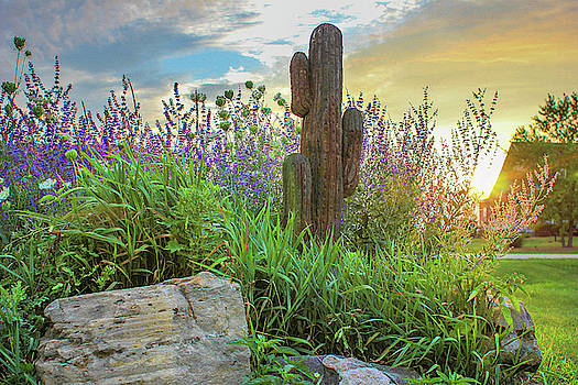 Moms Cactus Sunset by Jackie Novak