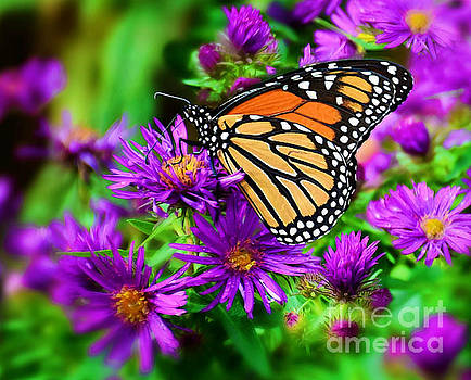 Monarch And Asters by Kathy M Krause