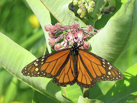 Monarch Butterfly and Caterpillar by Alison Gimpel