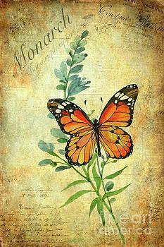 Monarch Butterfly by John Edwards