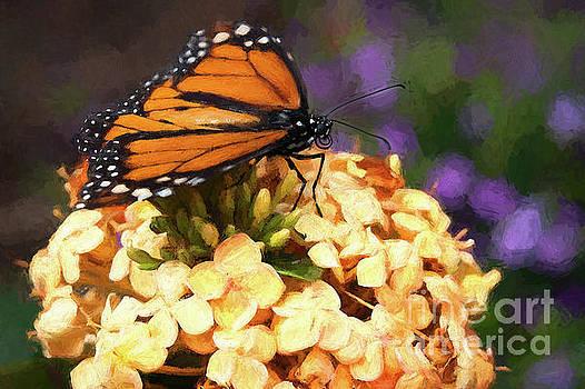 Monarch Butterfly by Patti Schulze