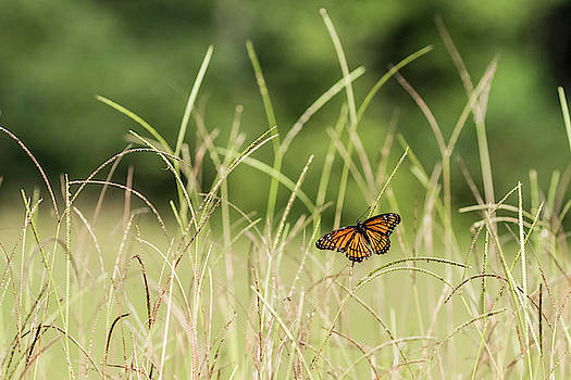 Butterfly Among The Weeds by Jordan Hill