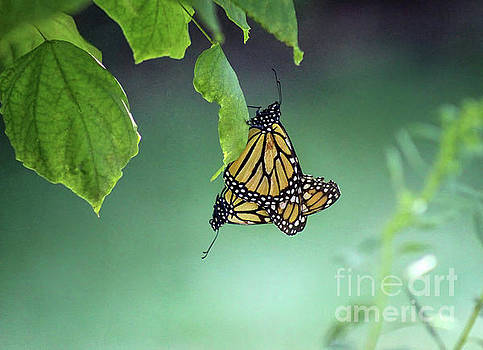Monarch Magic by Karen Adams