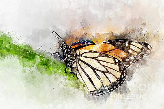 Monarch Watercolor by Bryan Keil
