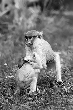 Monkey Business BW by David Stasiak