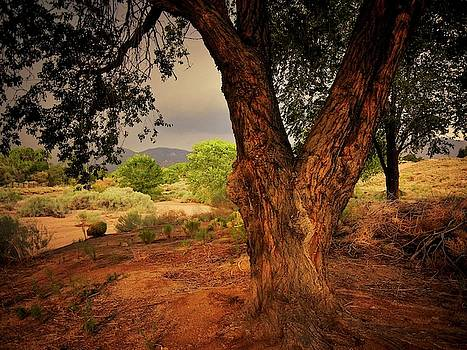 Monsoon Light-East, Albuquerque, New Mexico by Flying Z Photography by Zayne Diamond