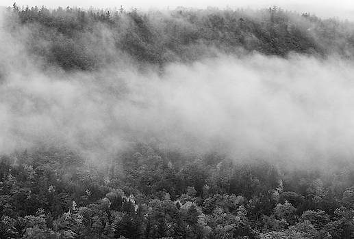 Moody Morning In The White Mountains by Dan Sproul