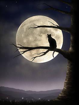 Moon Gazing by Jennifer Woodward