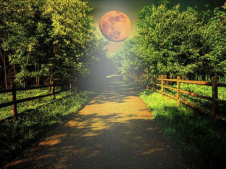 Moonlight Path by Kathy Gail