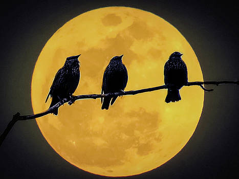 Moonlighters by Kathy Gail