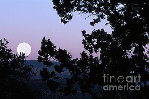 Moonrise in Sedona by Sandra Bronstein