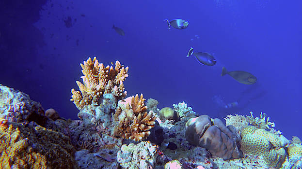 More healthy Tubbataha reefs by Paul Ranky