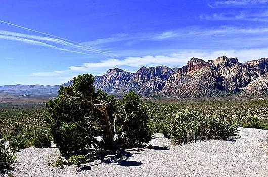 Morning at Red Rock by Craig Wood