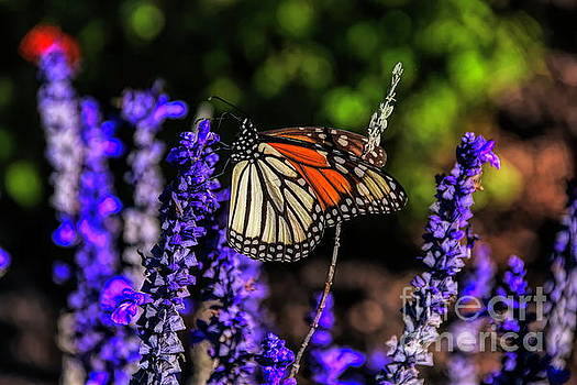 Morning Butterfly by Diana Mary Sharpton