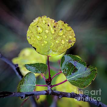 Morning Dew by Jon Vemo