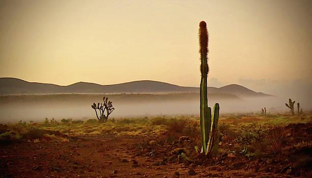 Baja Morning Fog by Bruce Herman