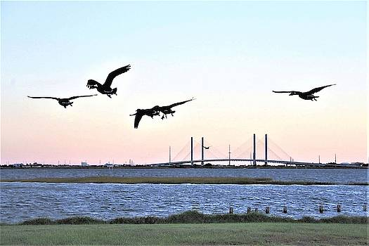 Morning Geese Flight - Indian River Inlet Bridge by Kim Bemis