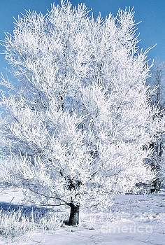 Morning Hoar Frost by Gary Richards