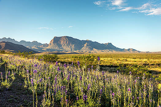 Morning in Big Bend by David Morefield