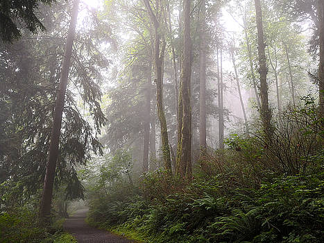 Jordan Barnes - Morning light on Burnaby Mountain