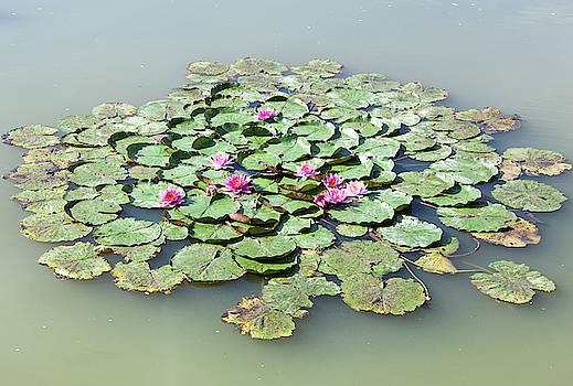Ramunas Bruzas - Morning Lilies