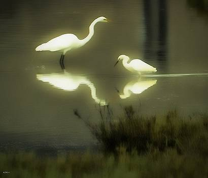Morning Reflection by John R Williams