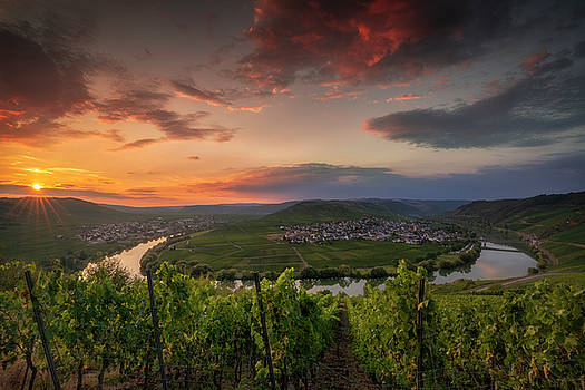 Moselle Intoxication by Ludwig Riml