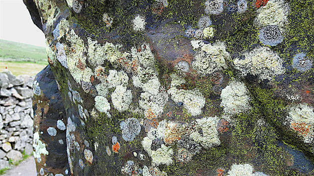 Moss and Lichen - Border Stone Scottish Border by Chris Gill