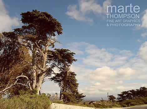 Moss Landing Cypress 2 by Marte Thompson