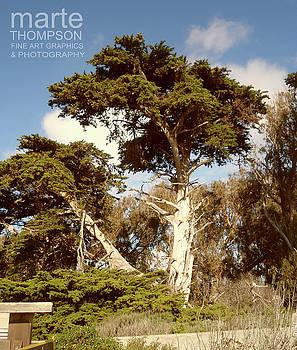 Moss Landing Cypress 3 by Marte Thompson