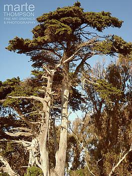 Moss Landing Cypress 4 by Marte Thompson