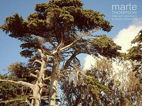 Moss Landing Cypress 5 by Marte Thompson